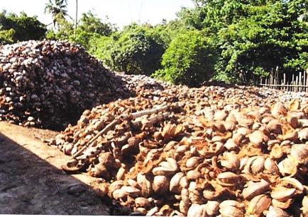 kokos-natur-1
