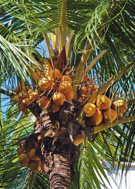 kokos-natur-2