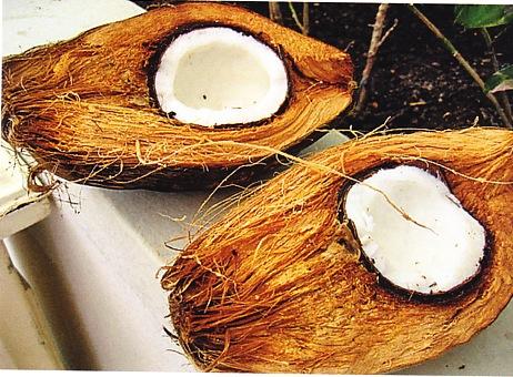 Kokosdämmstoffe natur Pur